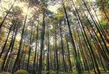 Wisata Gunung Pancar - AkuTravel. Sumber: Harga tiket