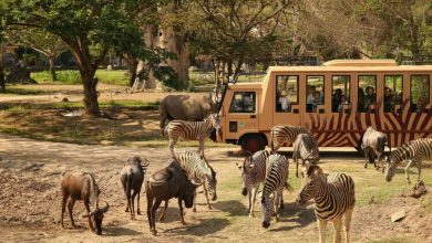 Taman Safari – AkuTravel. Sumber: Good News From Indonesia